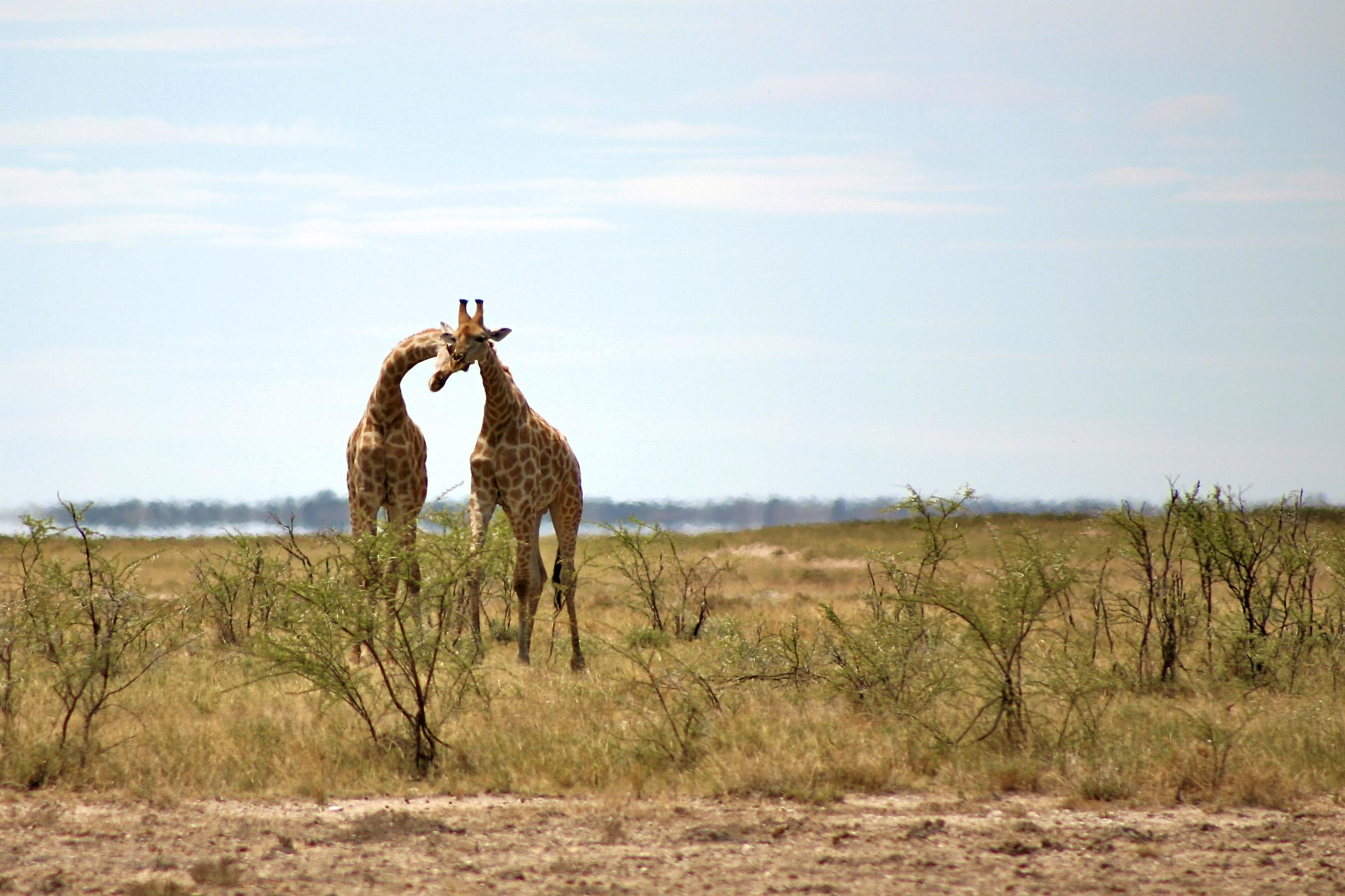 huwelijksreis namibie